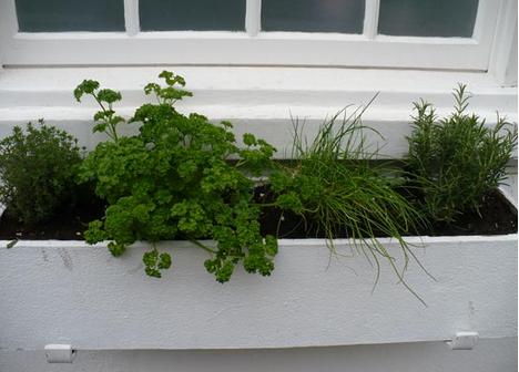 травы на окне