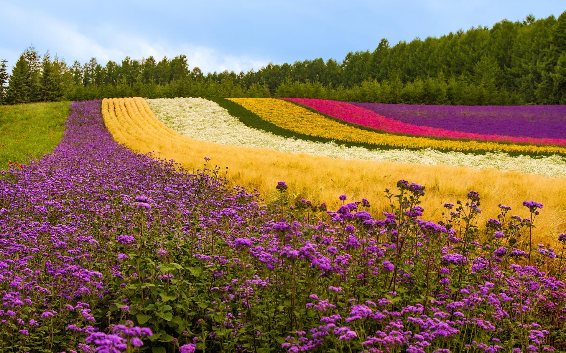 Чередование цветов