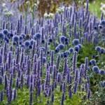 сине-фиолетовый цветник